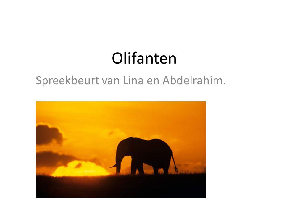 Spreekbeurt van Lina en Abdelrahim.