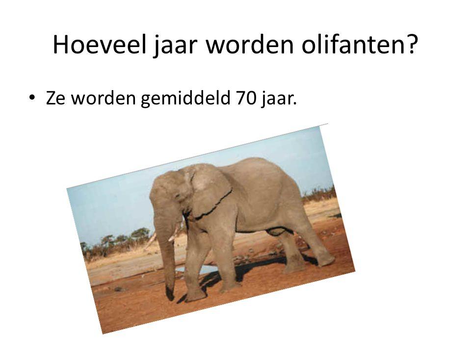 Hoeveel jaar worden olifanten