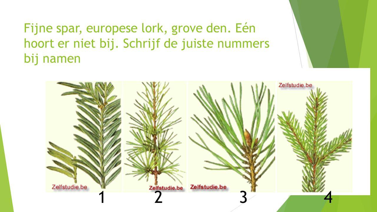 Fijne spar, europese lork, grove den. Eén hoort er niet bij