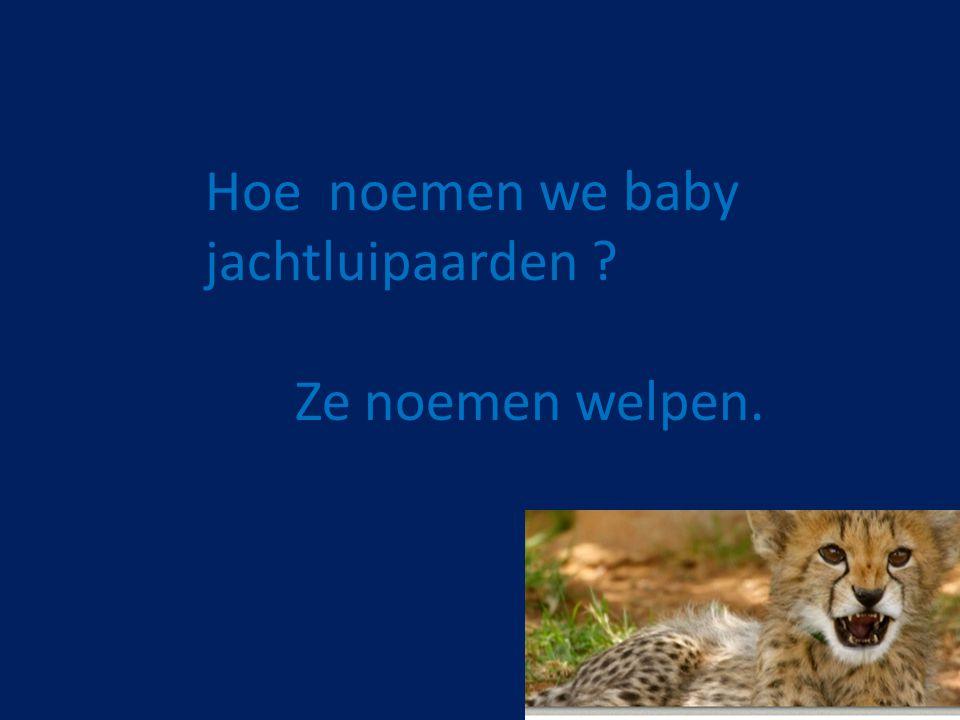 Hoe noemen we baby jachtluipaarden