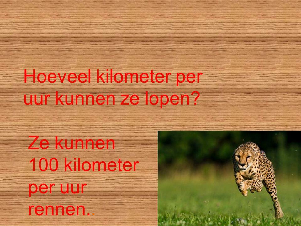Hoeveel kilometer per uur kunnen ze lopen