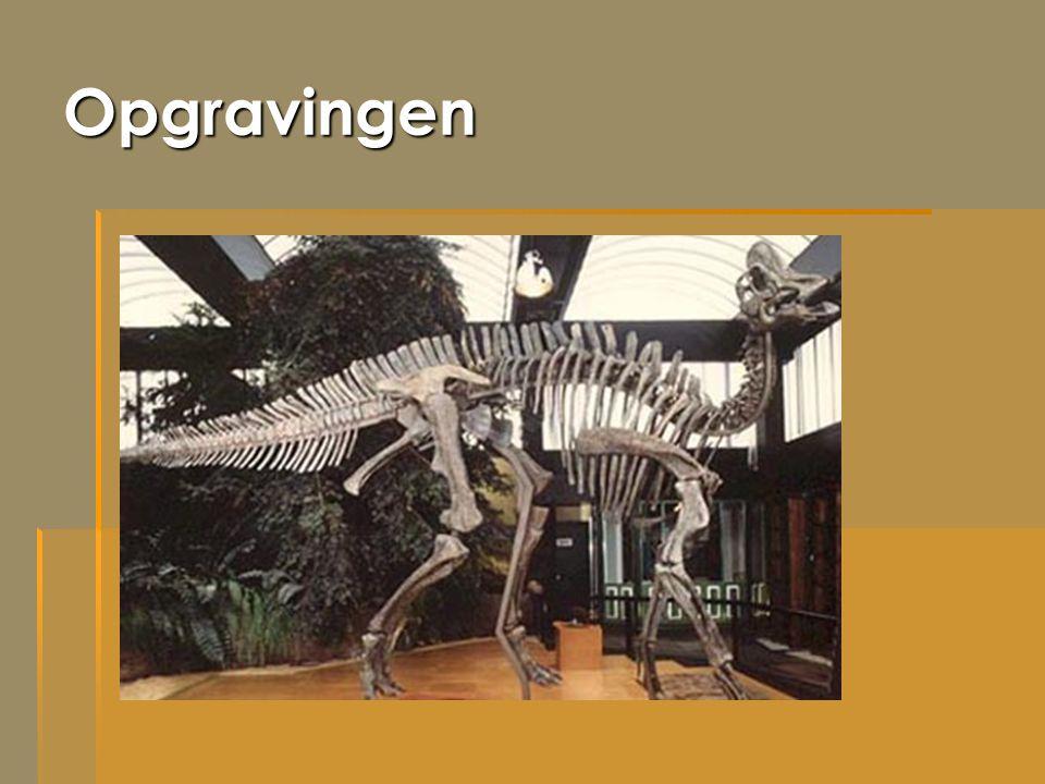 Opgravingen Dit is een dinosaurus die in elkaar gezet is met de botten die opgravers hebben gevonden.