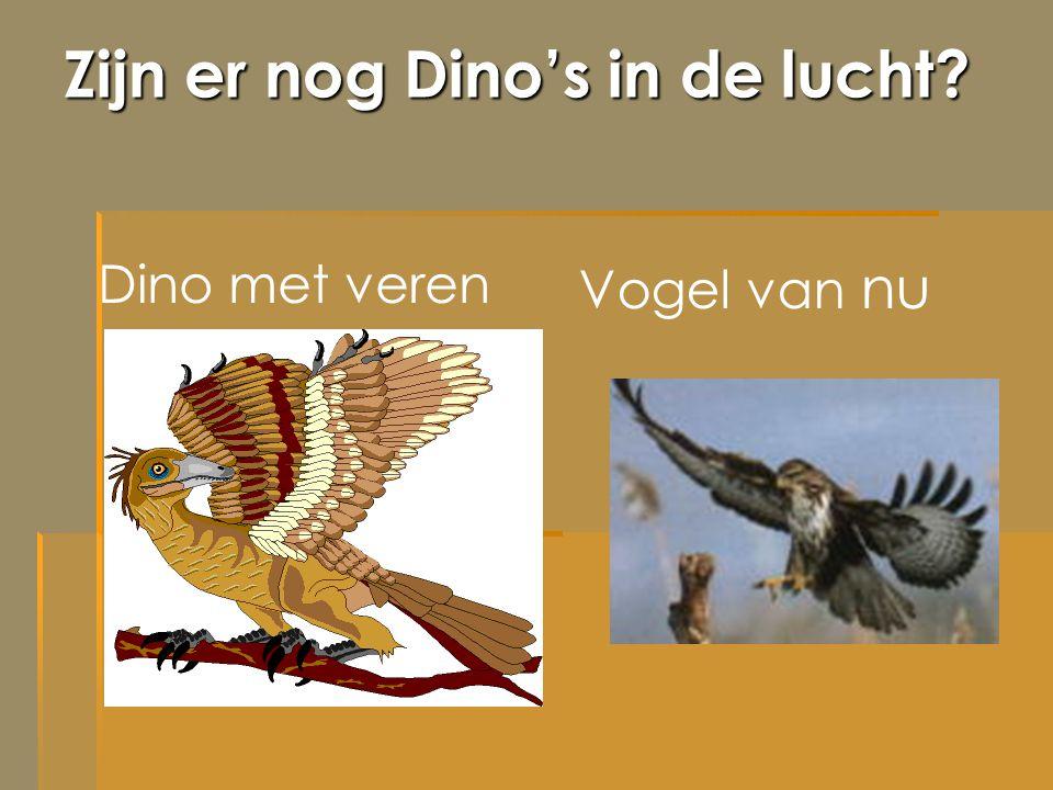 Zijn er nog Dino's in de lucht