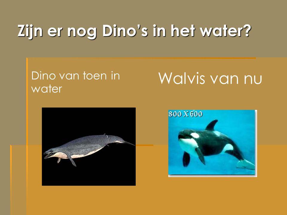Zijn er nog Dino's in het water