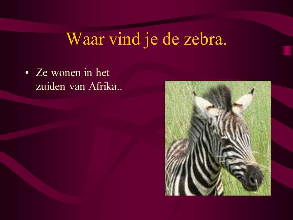 Waar vind je de zebra. Ze wonen in het zuiden van Afrika..