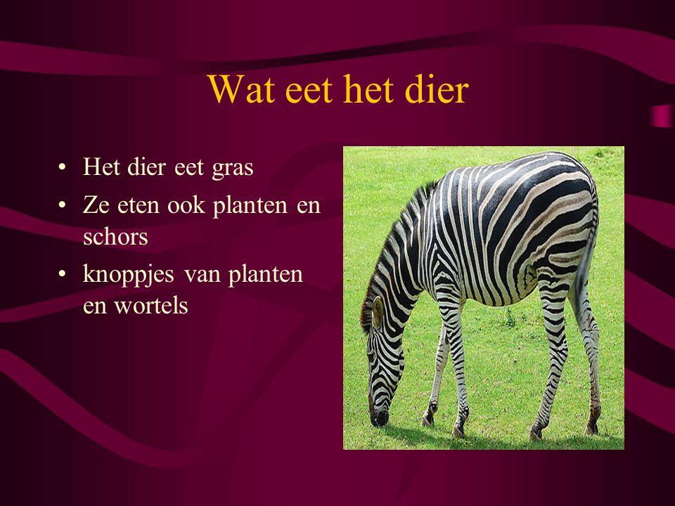 Wat eet het dier Het dier eet gras Ze eten ook planten en schors