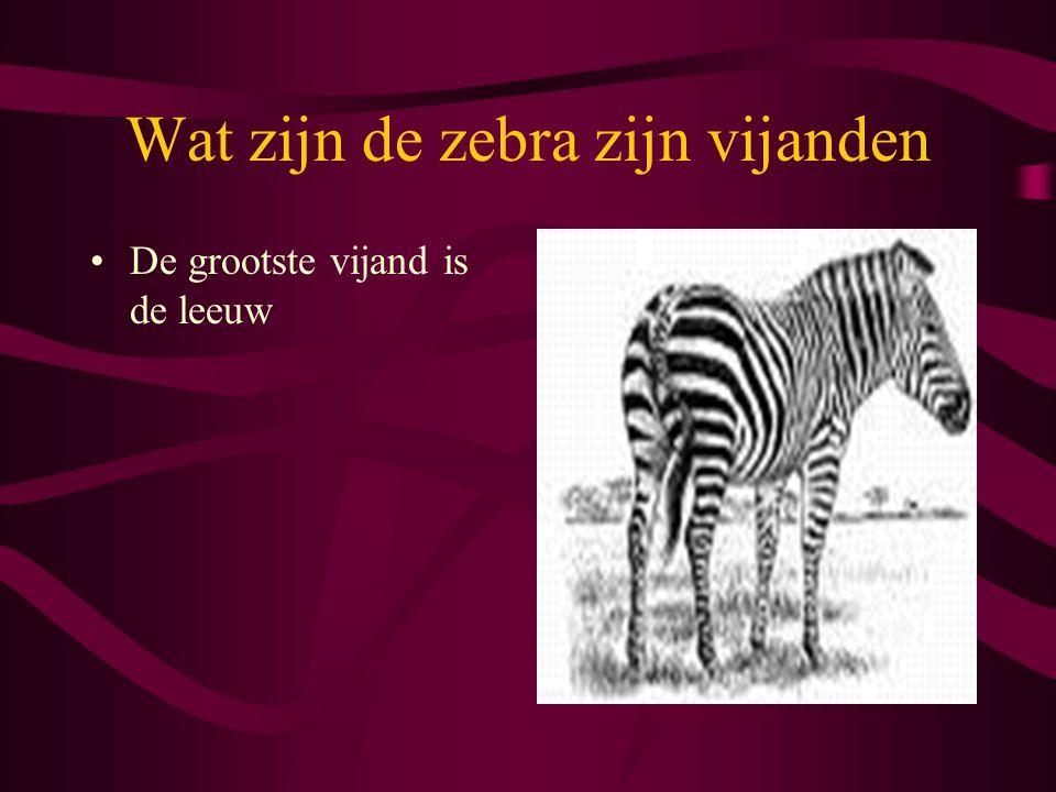 Wat zijn de zebra zijn vijanden