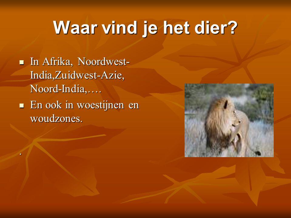 Waar vind je het dier In Afrika, Noordwest-India,Zuidwest-Azie, Noord-India,…. En ook in woestijnen en woudzones.