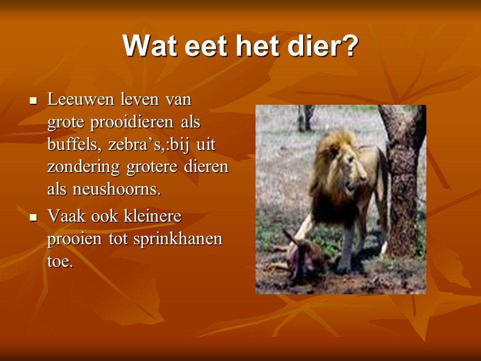 Wat eet het dier Leeuwen leven van grote prooidieren als buffels, zebra's,:bij uit zondering grotere dieren als neushoorns.