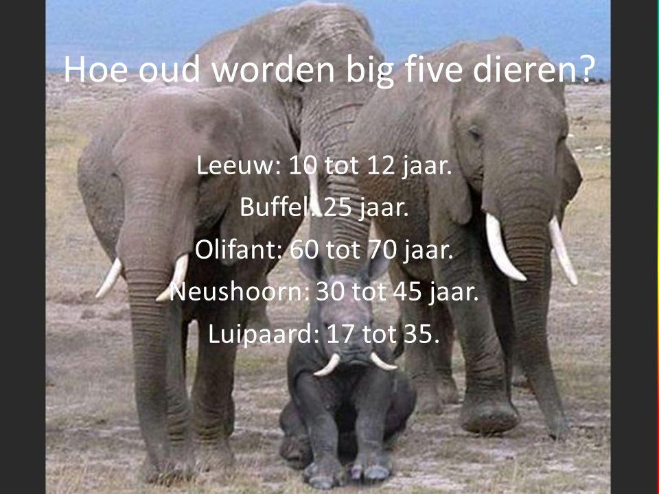 Hoe oud worden big five dieren