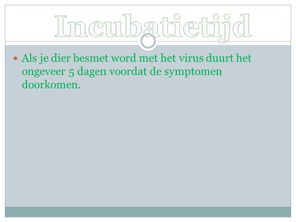 Incubatietijd Als je dier besmet word met het virus duurt het ongeveer 5 dagen voordat de symptomen doorkomen.