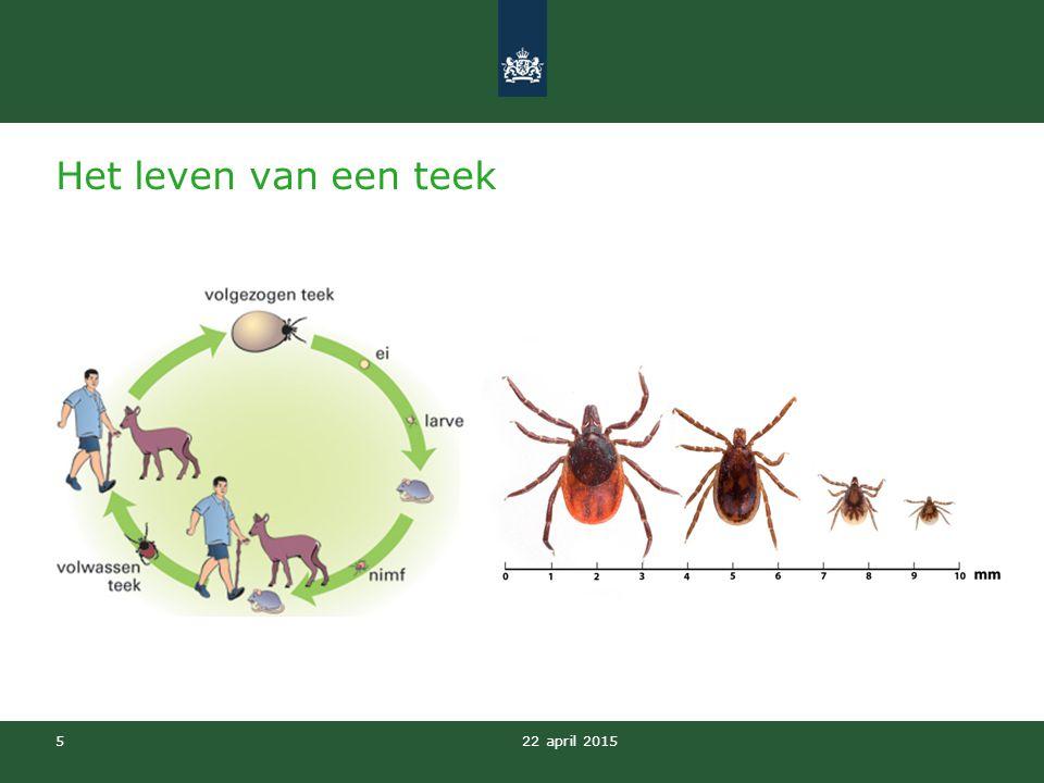 Het leven van een teek In Nederland is er één soort teek die de ziekte van Lyme kan overbrengen.