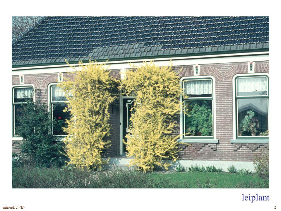 Forsythia suspensa blad, leiplant