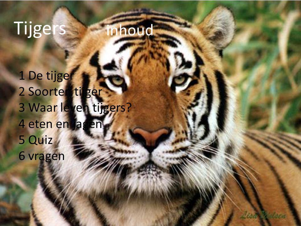 Tijgers inhoud 1 De tijger 2 Soorten tijger 3 Waar leven tijgers