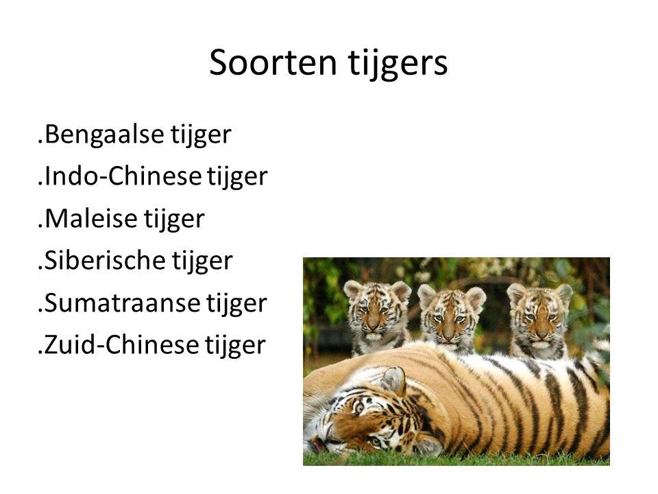 Soorten tijgers .Bengaalse tijger .Indo-Chinese tijger .Maleise tijger .Siberische tijger .Sumatraanse tijger .Zuid-Chinese tijger