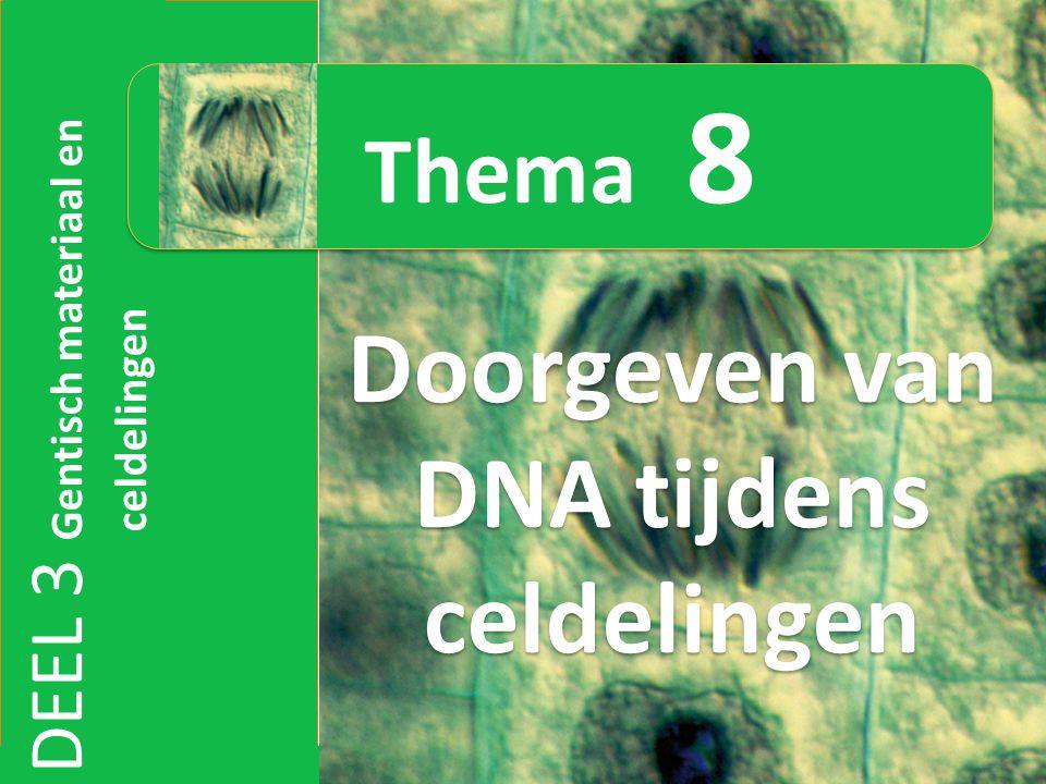 Doorgeven van DNA tijdens celdelingen