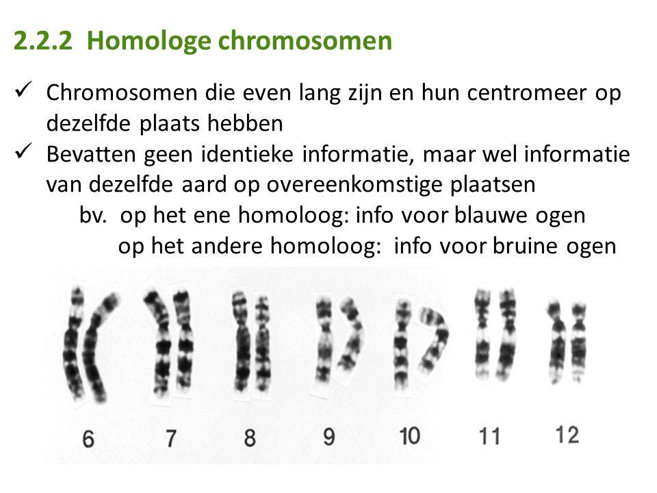 2.2.2 Homologe chromosomen Chromosomen die even lang zijn en hun centromeer op dezelfde plaats hebben.