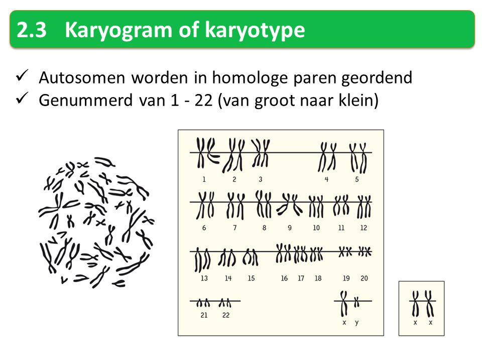 2.3 Karyogram of karyotype