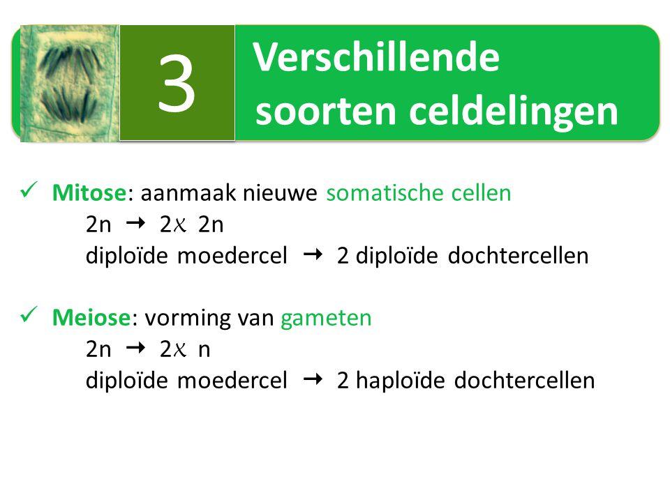 3 Verschillende soorten celdelingen