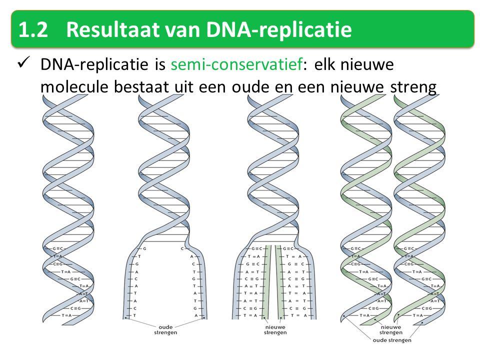 1.2 Resultaat van DNA-replicatie