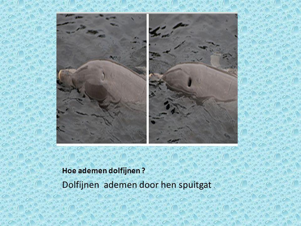Dolfijnen ademen door hen spuitgat .