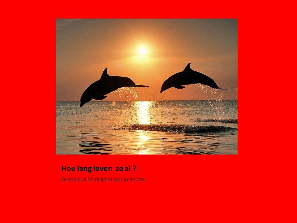Hoe lang leven ze al Ze leven al 55 miljoen jaar in de zee.