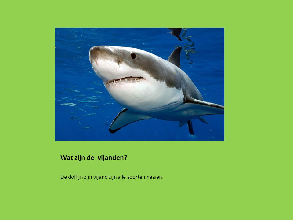 Wat zijn de vijanden De dolfijn zijn vijand zijn alle soorten haaien.
