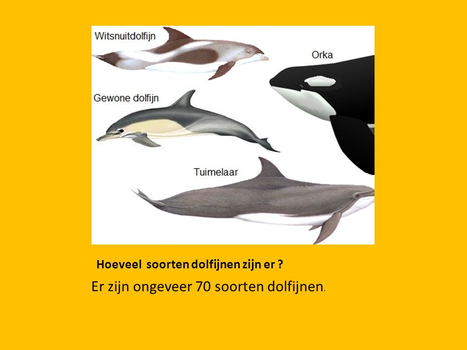 Hoeveel soorten dolfijnen zijn er