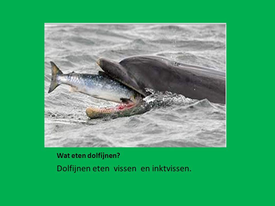 Dolfijnen eten vissen en inktvissen.