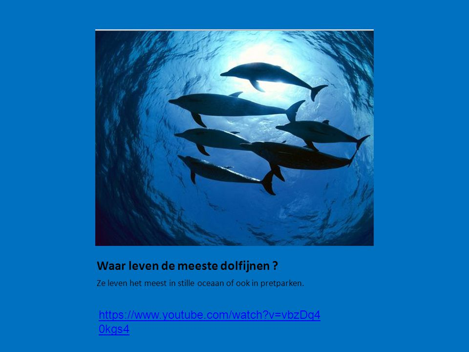 Waar leven de meeste dolfijnen