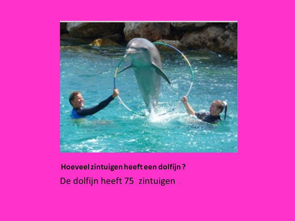 Hoeveel zintuigen heeft een dolfijn