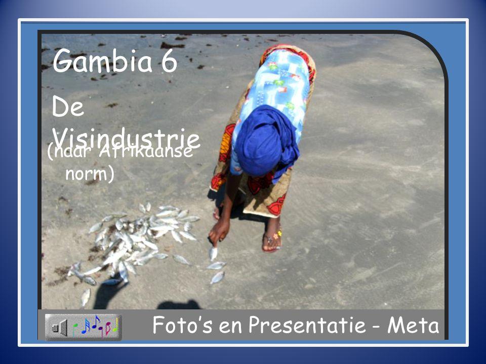 Gambia 6 De Visindustrie Foto's en Presentatie - Meta