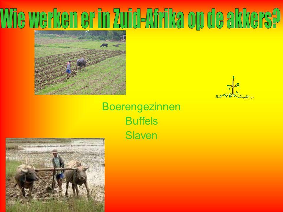 Boerengezinnen Buffels Slaven