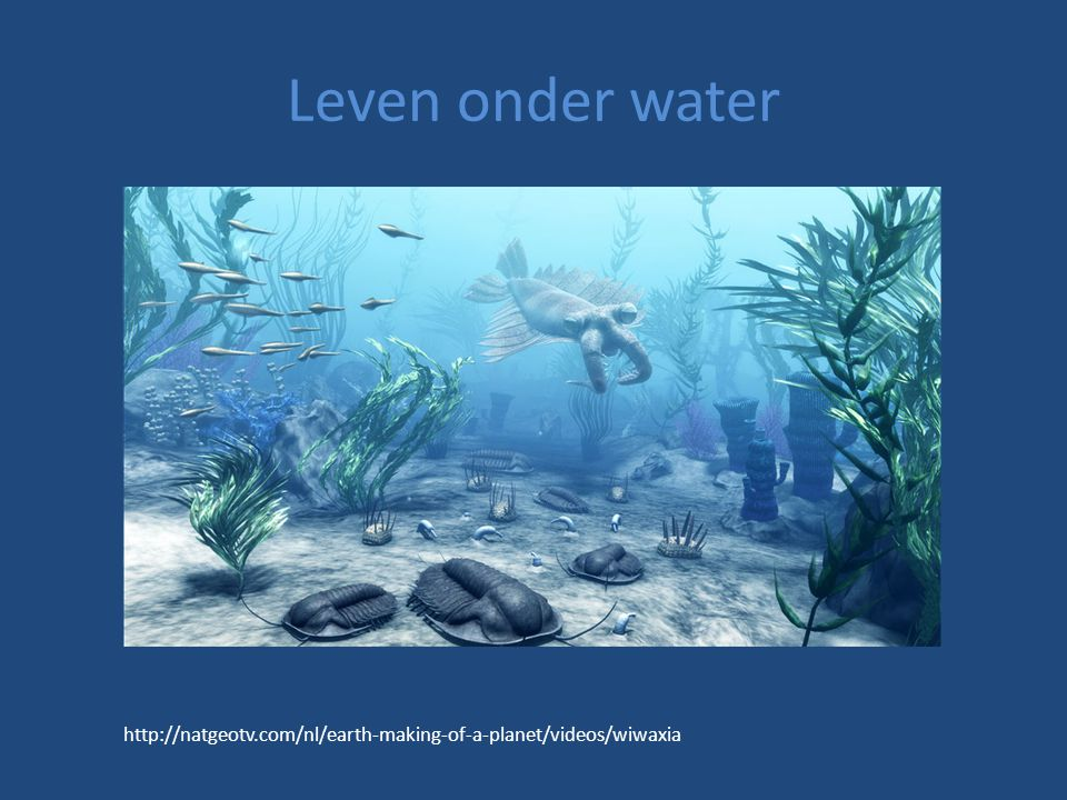 Leven onder water http://natgeotv.com/nl/earth-making-of-a-planet/videos/wiwaxia