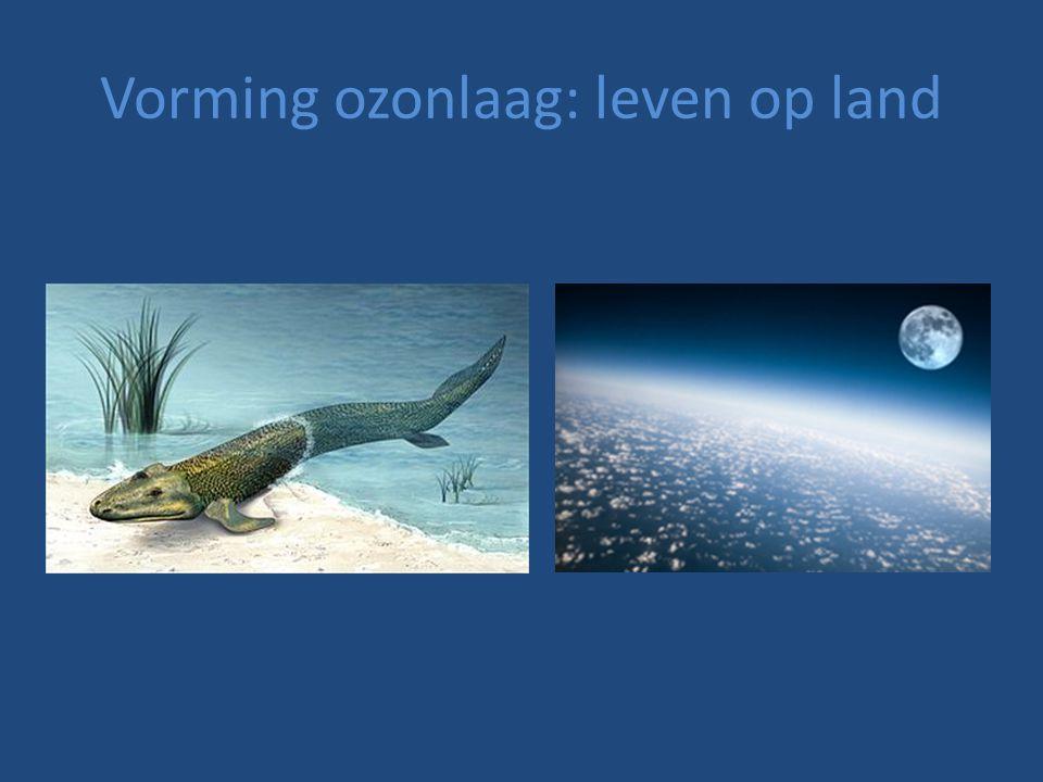 Vorming ozonlaag: leven op land
