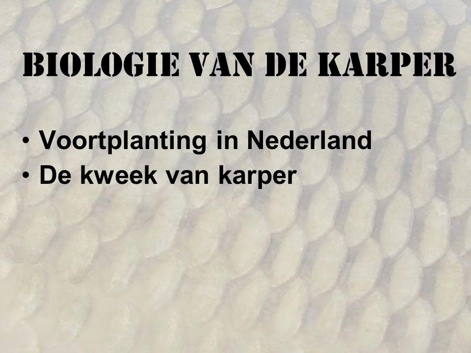 Biologie van de karper Voortplanting in Nederland De kweek van karper