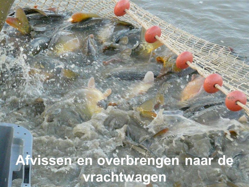 Afvissen en overbrengen naar de vrachtwagen