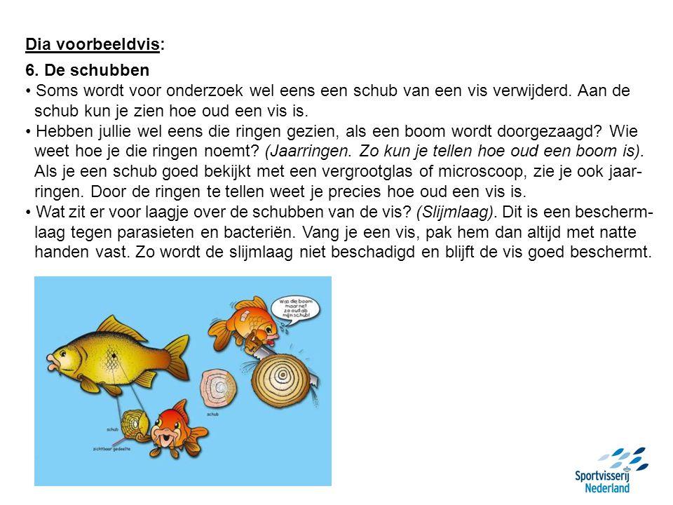 Dia voorbeeldvis: 6. De schubben. Soms wordt voor onderzoek wel eens een schub van een vis verwijderd. Aan de.