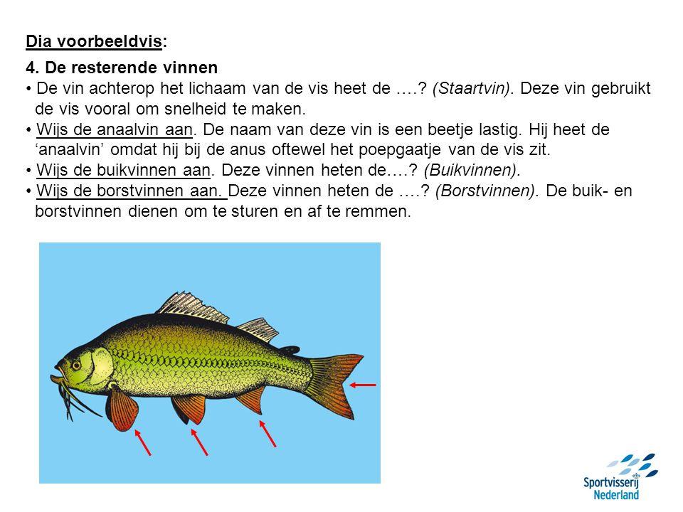 Dia voorbeeldvis: 4. De resterende vinnen. De vin achterop het lichaam van de vis heet de …. (Staartvin). Deze vin gebruikt.