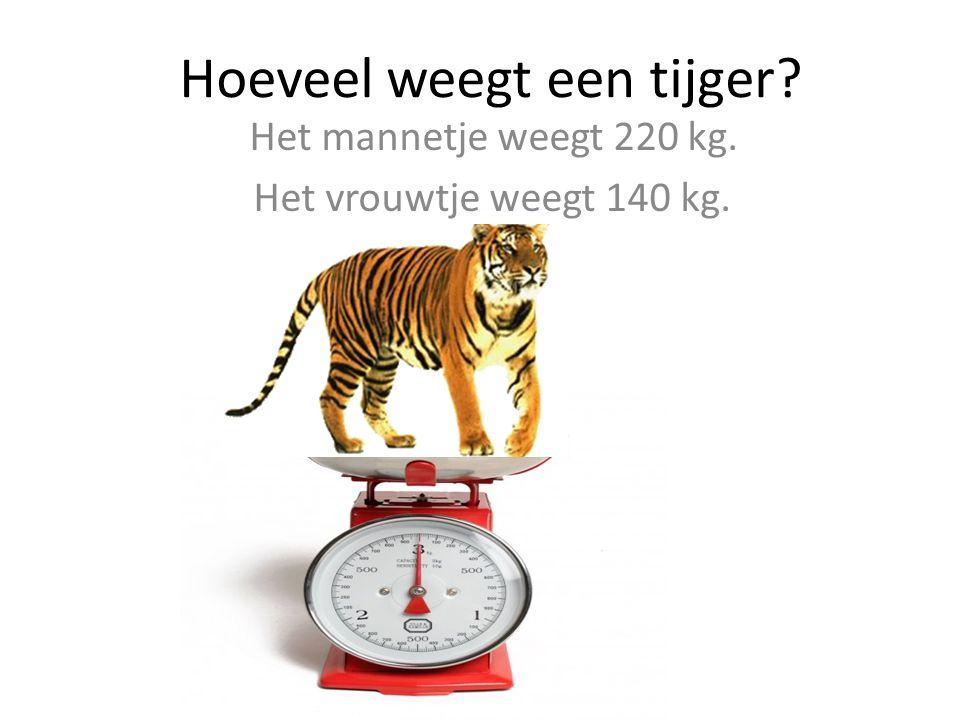 Hoeveel weegt een tijger