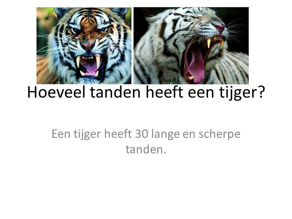 Hoeveel tanden heeft een tijger