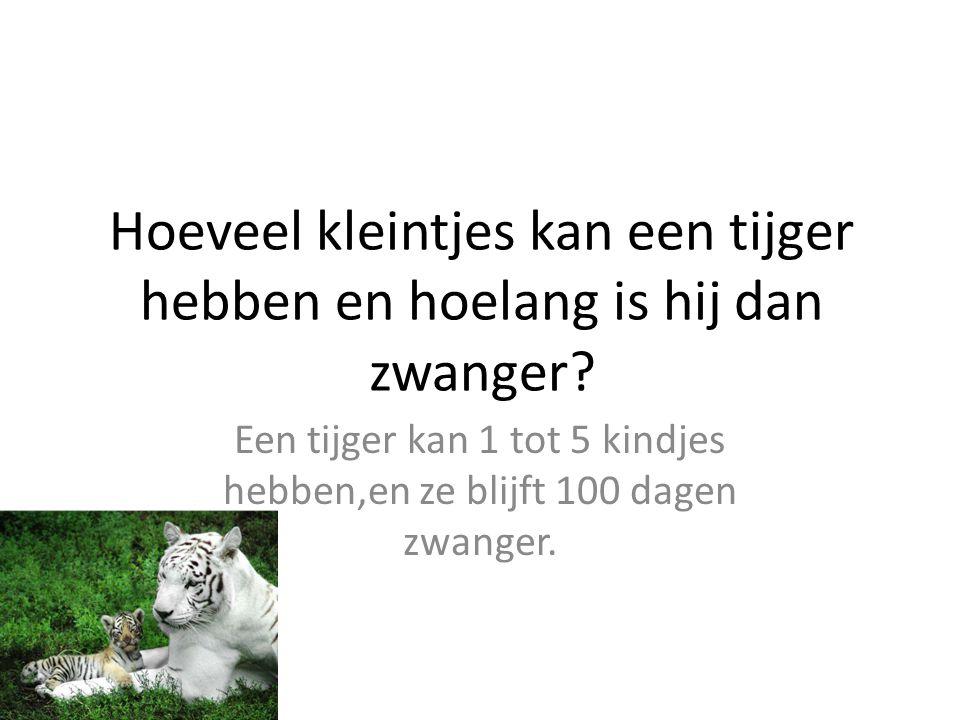 Hoeveel kleintjes kan een tijger hebben en hoelang is hij dan zwanger