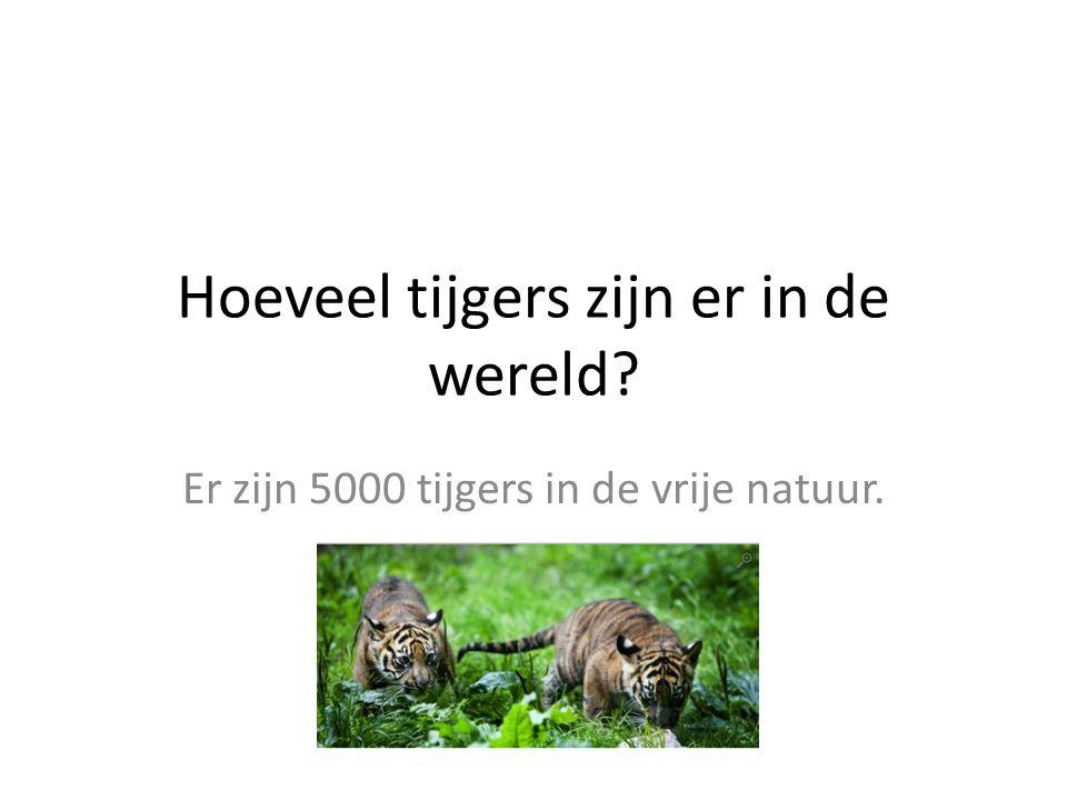 Hoeveel tijgers zijn er in de wereld