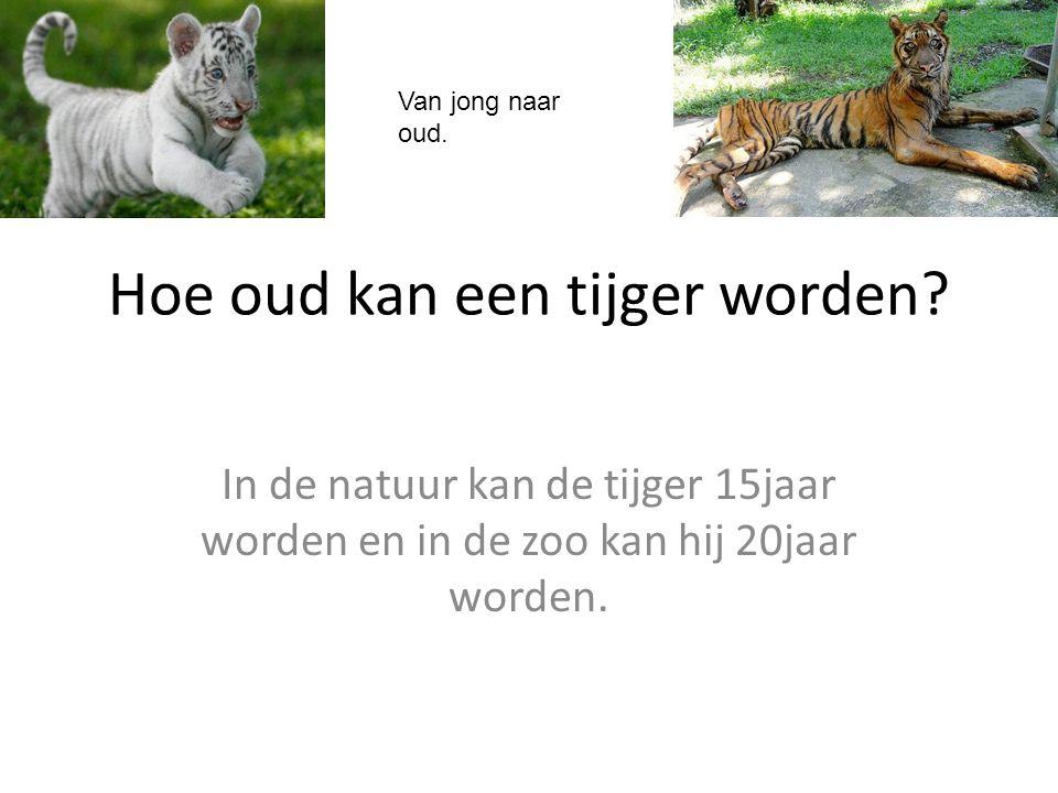 Hoe oud kan een tijger worden