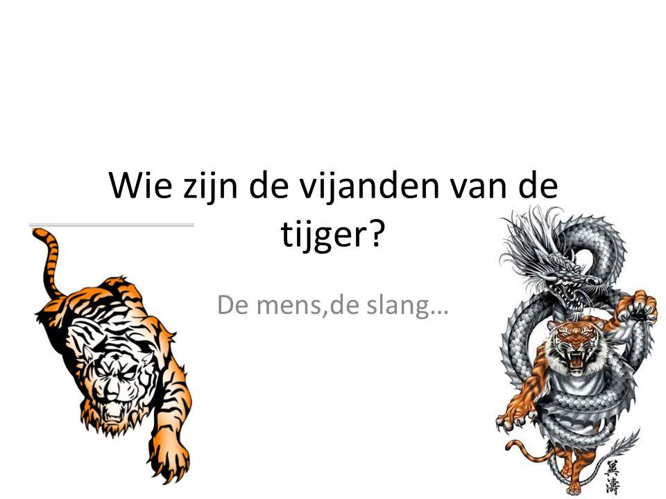 Wie zijn de vijanden van de tijger