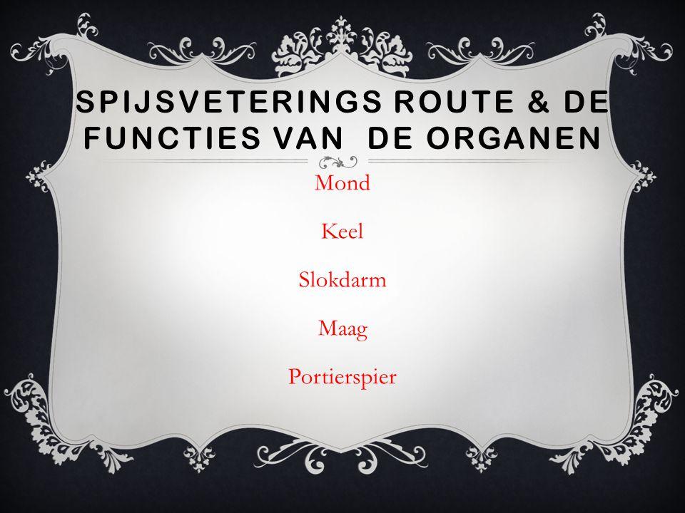 Spijsveterings route & de functies van de organen