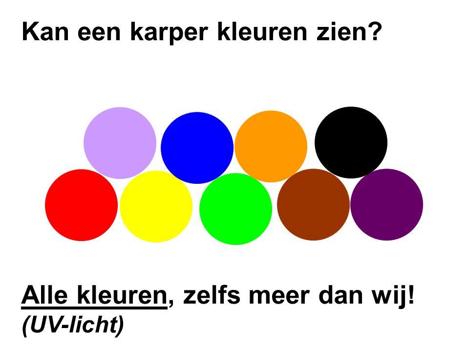 Kan een karper kleuren zien
