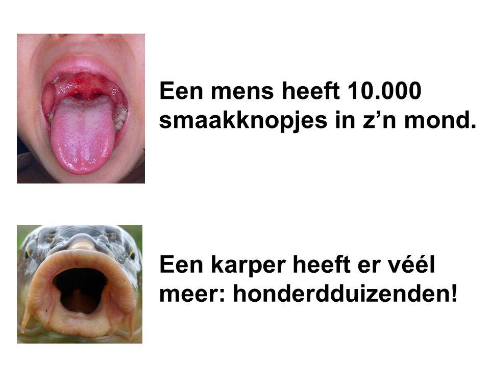 Een mens heeft 10.000 smaakknopjes in z'n mond.