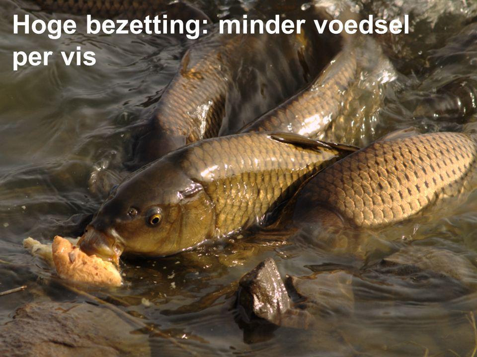 Hoge bezetting: minder voedsel per vis