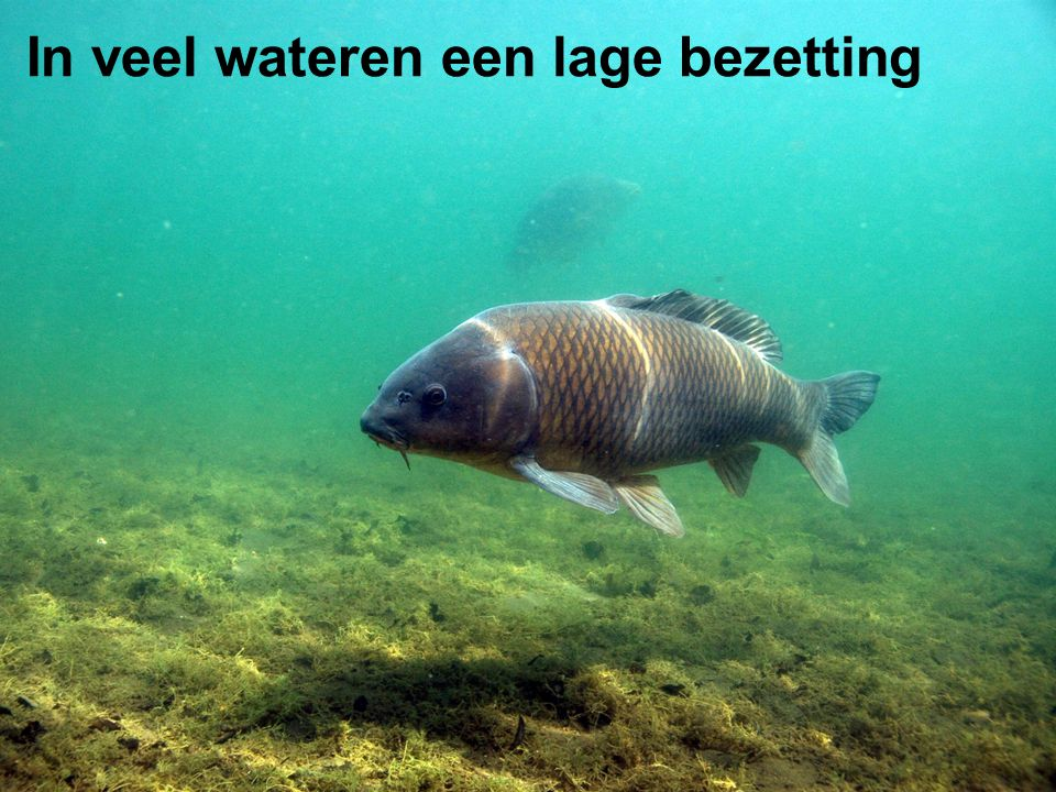 In veel wateren een lage bezetting